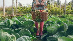 Geleceğin En Önemli Üretim Aracı Organik Tarım Olacak
