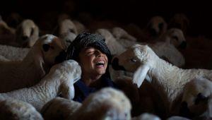Büyüleyici Tarım Ve Hayvancılık Fotoğrafları