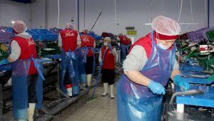 Kılıç Holding, Rusya'ya İhracata Devam Ediyor