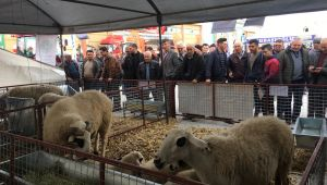 Ege Tarım, Sera Ve Hayvancılık Fuarı 180 Bin Ziyaretçi Ağırladı