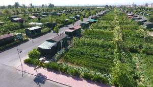 Hobi Bahçeleri Yasal Değildir