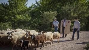 İzmir'de Hayvanlar Meraya Salındı