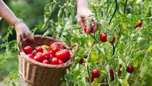 Sağlıklı Gıda İçin Tarım İlaçlarına Yasak Getirildi