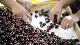 Ege'den Tarım İhracatı Yüzde 38 Oranında Arttı