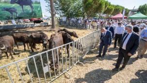 İzmir'de Hayvancılık Destekleri Sürüyor