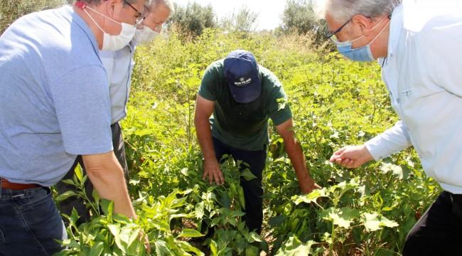 İzmir'de Yerli Tohum Yetiştiriciliği Artıyor