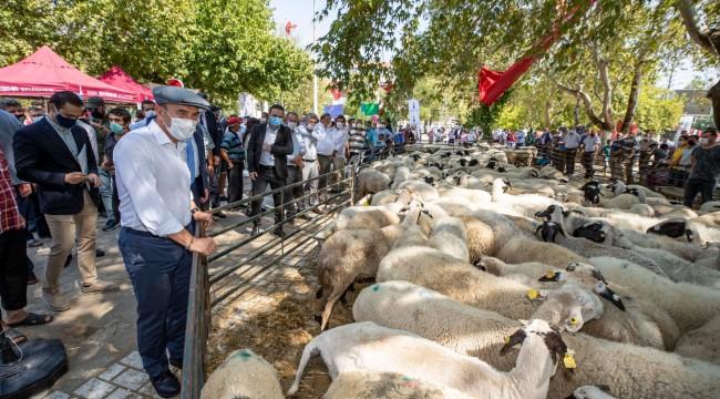 İzmirli Çiftçilere Hayvancılık Desteği