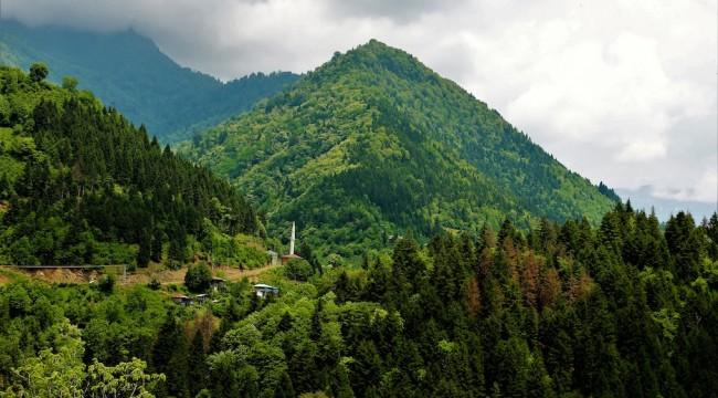 Ormanlar Sera Gazı Salınımının Yüzde 16'sını Tutuyor