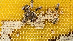 Yaşamın Döngüsünde Arıların Önemi