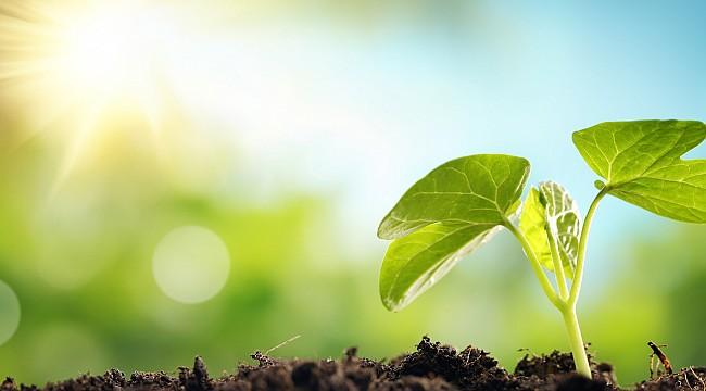 Vegan ve ekolojik hijyen ürünleri tercih etmek için 3 sebep