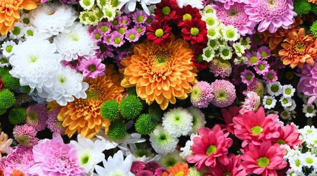 Çiçek ihracatları yüzde 100 arttı